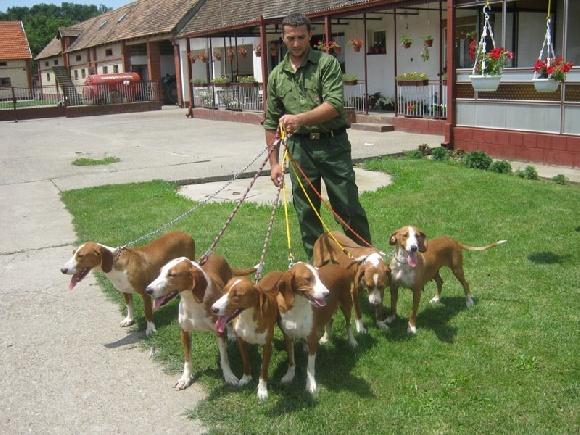 Elevage Des Laçets De Montvernier éleveur de chiens